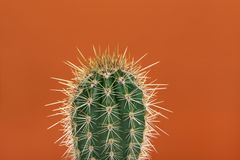 Cactus espinoso verde en un fondo anaranjado fotos de archivo libres de regalías
