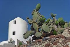 Cactus et bâtiment blanc chez Imerovigli, Santorini, Grèce Photos libres de droits