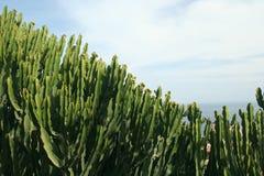 Cactus et ciel Image libre de droits