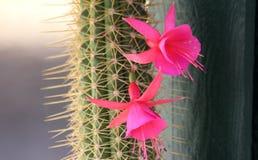Cactus et fleur rose Photo stock
