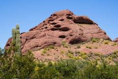 Cactus et montagne de Saguaro Photographie stock