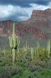 Cactus et montagnes 1 de Saguaro Photo stock