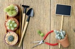 Cactus et outils de jardinage sur le fond en bois Photographie stock
