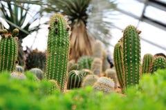 Cactus et plantes succulentes sur l'affichage Photo stock