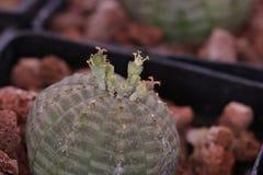 Cactus et succulents de jardinage Images libres de droits