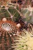 Cactus et succulents de jardinage Image stock