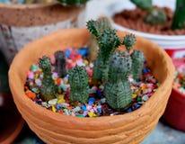 Cactus extraño Foto de archivo libre de regalías