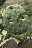 Cactus Face Royalty Free Stock Photography