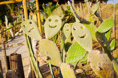 Cactus faces in the garden Stock Photos