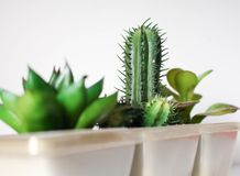Cactus fake. On the table Stock Image