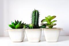 Cactus fake Stock Photography