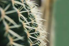 Cactus Family, close up barrel cactus. thorn cactus texture background, close up. Cactus Family, close-up barrel cactus. thorn cactus texture background, close stock photo