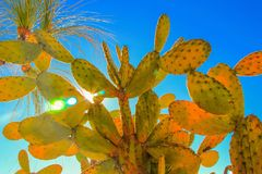 Cactus Family Stock Photography