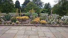 Cactus fantastic Stock Photos