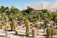 Cactus farm Stock Photo