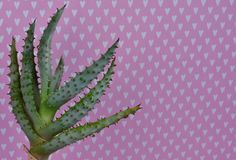 Cactus Fashion Set Design. Minimal fashion Still life. Trendy Bright Colors. Green cactus on pink background with white hearts Stock Photography