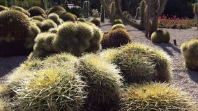 Cactus field in the park Royalty Free Stock Photos
