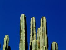Cactus fields royalty free stock photos