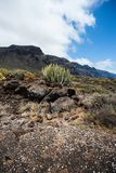 Cactus fields and cliffs at Punta del Teno royalty free stock image