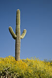 Cactus, fiori e cielo del deserto fotografia stock libera da diritti