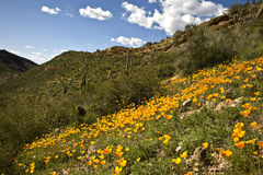 Cactus, fiori e montagne del deserto immagini stock libere da diritti