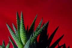 The Cactus in the Flames Royalty Free Stock Photography
