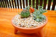 Cactus and flaming katy. A Cactus and flaming katy Stock Photo