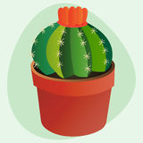 Cactus flat style nature desert flower green cartoon drawing graphic mexican succulent and tropical plant garden art Royalty Free Stock Photography