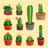 Cactus flat style nature desert flower green cartoon drawing graphic mexican succulent and tropical plant garden art Royalty Free Stock Photo