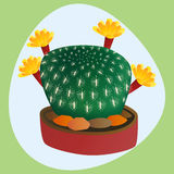 Cactus flat style nature desert flower green cartoon drawing graphic mexican succulent and tropical plant garden art. Cacti floral vector illustration. Style Stock Images