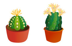 Cactus flat style nature desert flower green cartoon drawing graphic mexican succulent and tropical plant garden art. Cacti floral vector illustration. Style Stock Photos