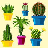 Cactus flat style nature desert flower green cartoon drawing graphic mexican succulent and tropical plant garden art. Cacti floral vector illustration. Style Stock Photography