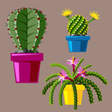 Cactus flat style nature desert flower green cartoon drawing graphic mexican succulent and tropical plant garden art Royalty Free Stock Image