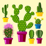 Cactus flat style nature desert flower green cartoon drawing graphic mexican succulent and tropical plant garden art Royalty Free Stock Photos
