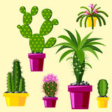 Cactus flat style nature desert flower green cartoon drawing graphic mexican succulent and tropical plant garden art. Cacti floral vector illustration. Style Royalty Free Stock Photo