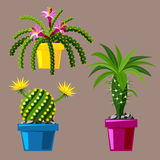 Cactus flat style nature desert flower green cartoon drawing graphic mexican succulent and tropical plant garden art. Cacti floral vector illustration. Style Royalty Free Stock Photos