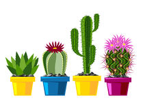 Cactus flat style nature desert flower green cartoon drawing graphic mexican succulent and tropical plant garden art Stock Photo