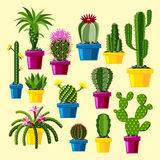 Cactus flat style nature desert flower green cartoon drawing graphic mexican succulent and tropical plant garden art. Cacti floral vector illustration. Style Stock Image