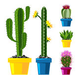 Cactus flat style nature desert flower green cartoon drawing graphic mexican succulent and tropical plant garden art. Cacti floral vector illustration. Style Royalty Free Stock Photography
