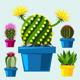 Cactus flat style nature desert flower green cartoon drawing graphic mexican succulent and tropical plant garden art. Cacti floral vector illustration. Style Royalty Free Stock Image