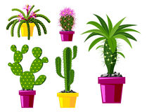 Cactus flat style nature desert flower green cartoon drawing graphic mexican succulent and tropical plant garden art Stock Photos