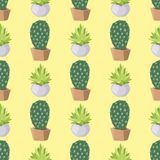Cactus nature desert flower green mexican succulent tropical plant seamless pattern cacti floral  illustration. Stock Photography