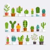 Cactus flat style. Vector Royalty Free Stock Photos