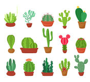 Cactus flat style. Vector illustration. Stock Images