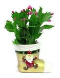 Cactus fleurissant sur un fond blanc Photo stock
