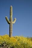 Cactus, fleurs et ciel de désert Photo libre de droits