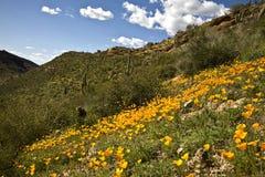 Cactus, fleurs et montagnes de désert Images libres de droits