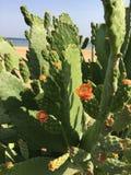 Cactus floreciente imagenes de archivo