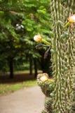 Cactus floreciente Imágenes de archivo libres de regalías