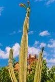 Cactus floreciente contra el cielo azul y la iglesia Ermita Mare de Deu de la Riera, Tarragona, Catalunya, Spai Imagen de archivo